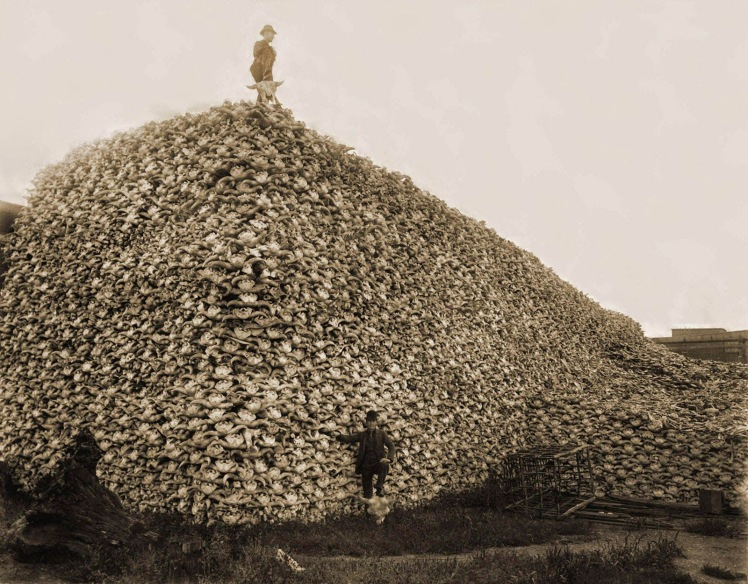 Bison+skulls+pile+to+be+used+for+fertilizer+,+1870